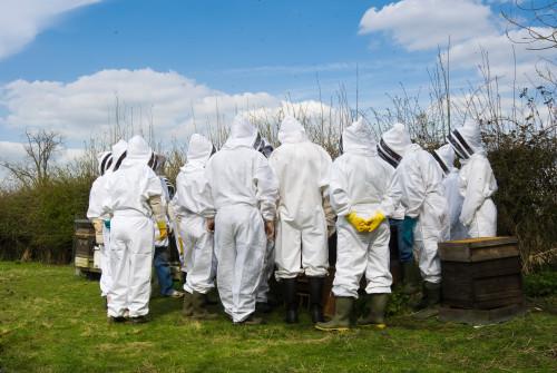 corso di apicoltura roma e lazio